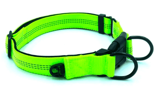 dog leash to sell on shopify